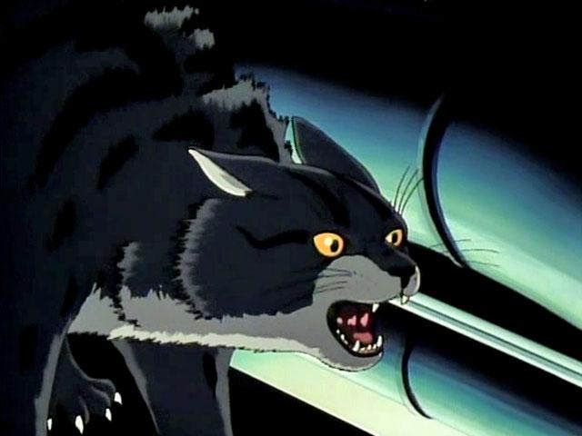 lily cat CAT